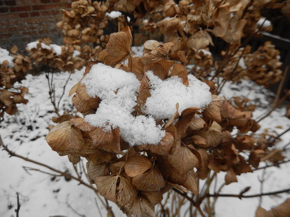 snow-1149772_960_720